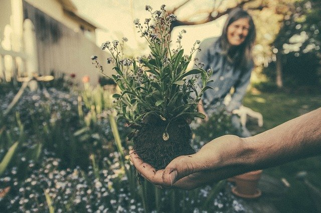 Invitation à planter !